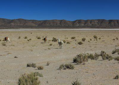 Andy, boliwia, wyprawy rowerem, przygoda, (47)